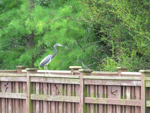 Bird Island Bird Wildlife 1
