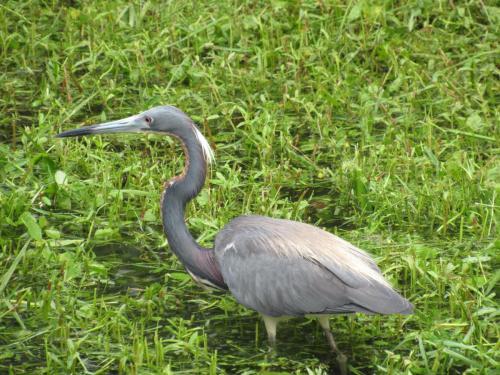 Bird Island Bird Wildlife 2
