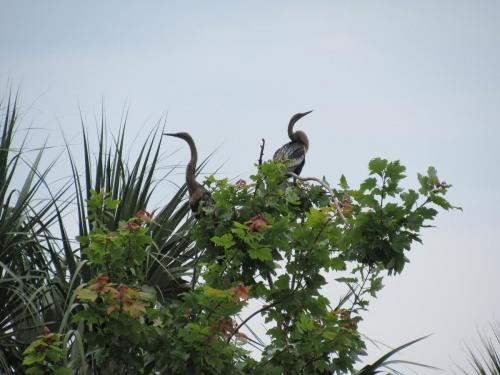Bird Island Bird Wildlife 3