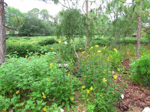Bird Island Butterfly Garden 1