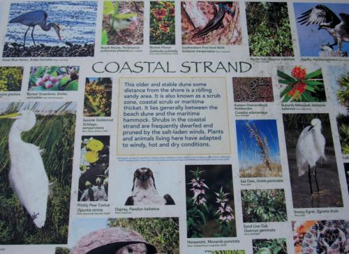 Bird Island Coastal Strand Storyboard
