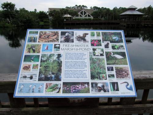 Bird Island Freshwater Pond Storyboard
