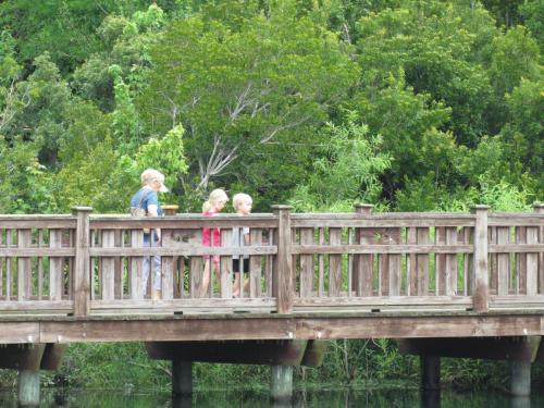 Bird Island Visitors