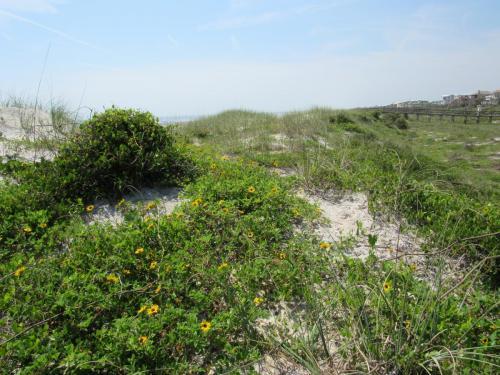 Butler Beach 2