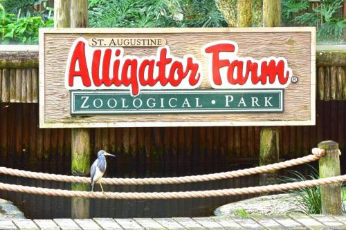 Alligator Farm Sign RKL